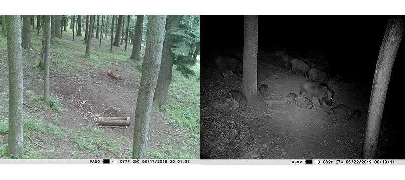 Camera vanatoare PNI Hunting 400C 12M cu 4G