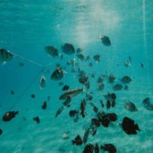 camera subacvatica, PNI, pescuit